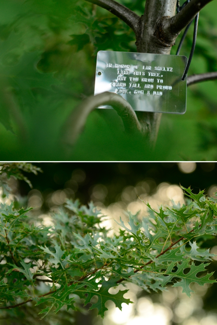 tree blog2